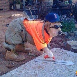 w_il-cane-muratore